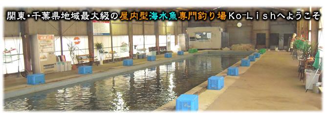 雨なし風なしボウズなし。コリュッシュは関東・千葉地域最大級の屋内型海水魚管理釣り場・釣堀です!