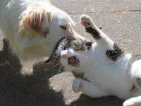 cat00028